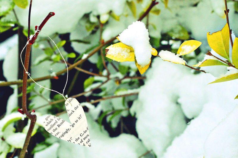 Snow hearts lomo