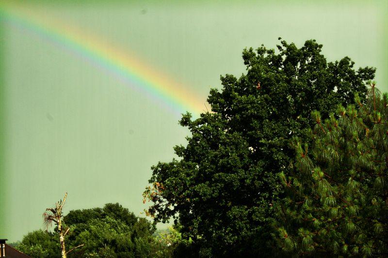 Rainbow Lomo