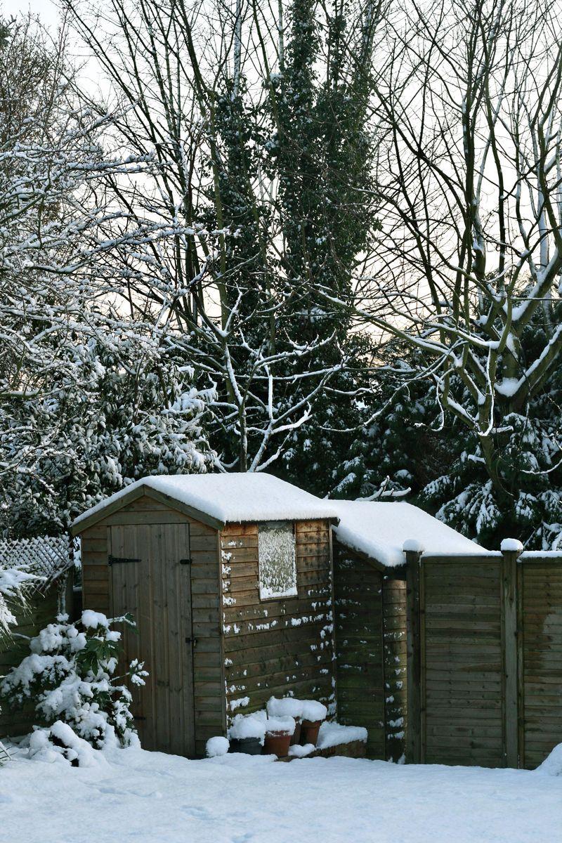 Snow + garden
