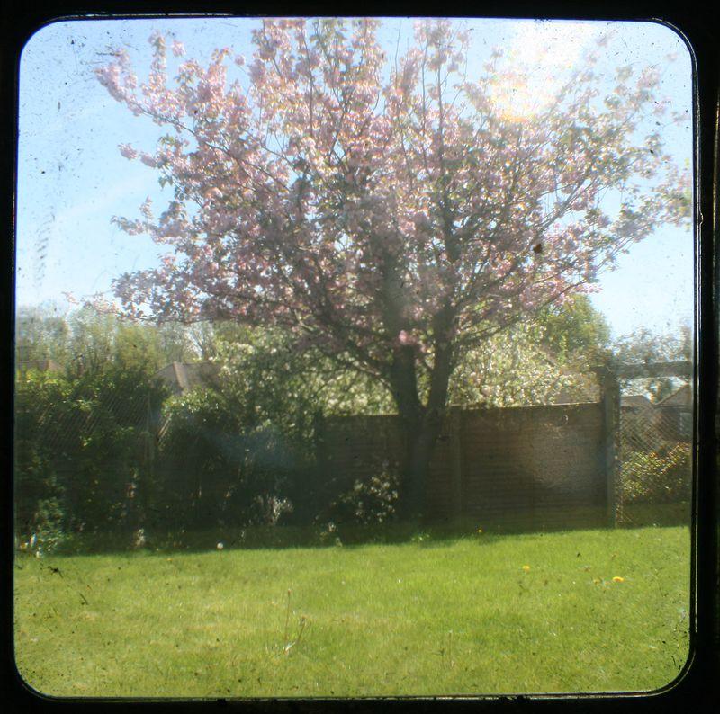 TTV garden 2
