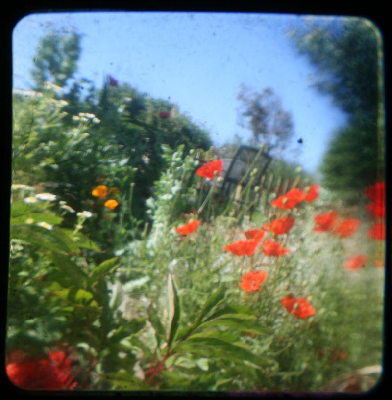 TTV Bude garden