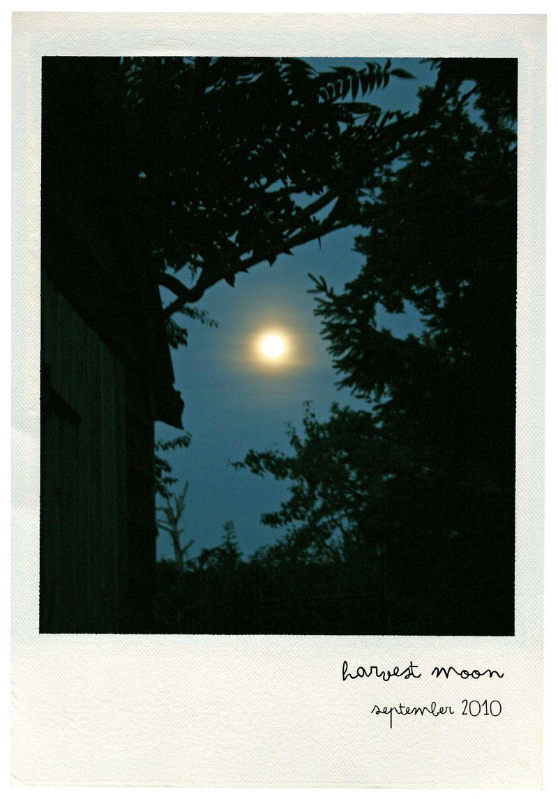 Harvest moon pola