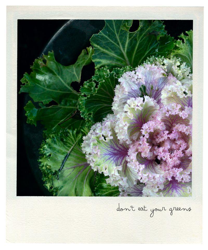 Ornamental cabbage pola