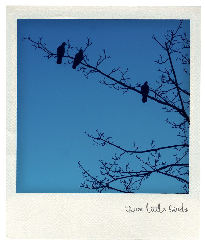 Three little birds pola