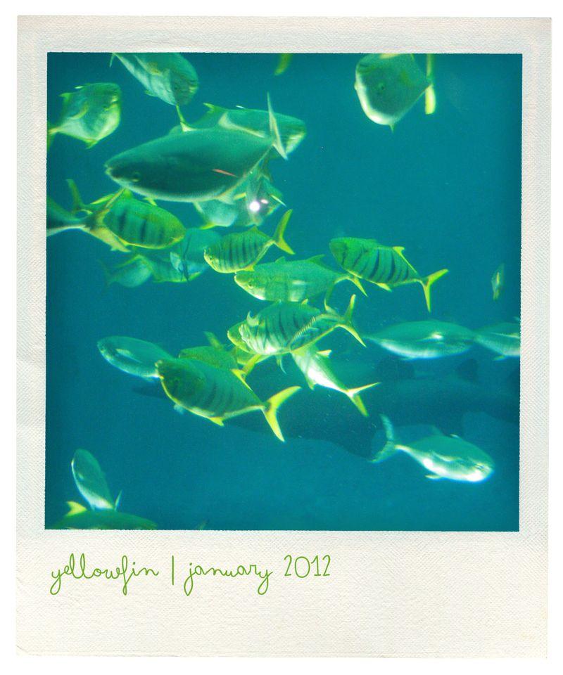 Aquarium polaroid