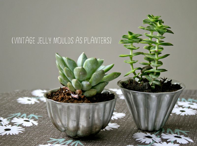 Jelly mould succulents | KirstyNeale